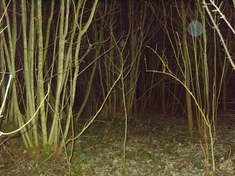 Wychling Woods ghost hunt - Click to enlarge
