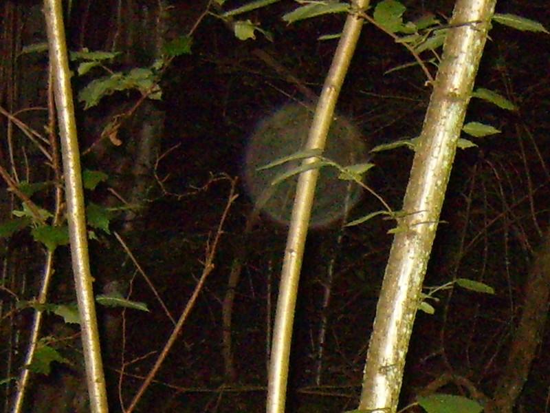 Bicknor Woods ghost hunt title=