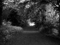 Vinters Park (August)